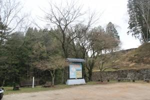 岩村城 本丸の桜(つぼみ)